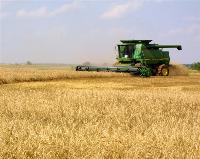 黑龙江春小麦