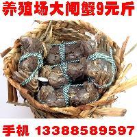 大闸蟹,螃蟹,毛蟹,清水蟹,官网礼盒