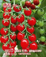 鸿禧F1樱桃小番茄种子