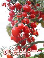 鸿玉F1小番茄种子 好吃的圣女果