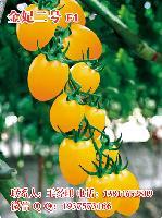 金妃一号黄圣女果种子 黄色小番茄种子