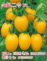 金妃二号黄圣女果种子 黄樱桃番茄种子