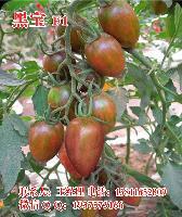 黑宝F1黑番茄种子-特色小番茄种子
