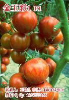 金玉彩1五彩水果小西红柿种子 特色小番茄种子