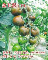 金玉彩3五彩小番茄种子,水果小西红柿种子