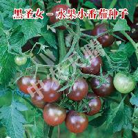 黑圣女黑番茄种子-进口番茄种子-圣女果种子