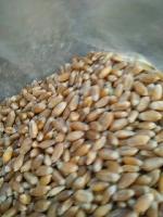 小麦价格走势