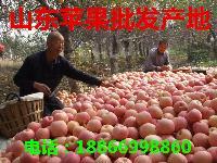 最新红星苹果批发价格 红星苹果产地价格更新报价