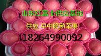 红富士苹果批发价格 近期收购价格