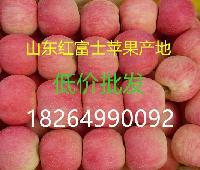 山东红富士苹果价格 果园现摘