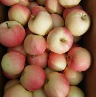 纸袋嘎啦苹果嘎啦苹果产地直销价格基地批发价格行情