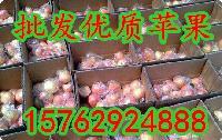 山东美八苹果价格 美国八号苹果价格