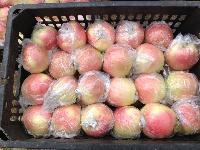 供应山东苹果美八嘎啦大量上市