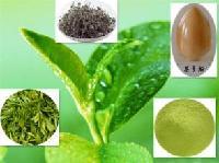 供应绿茶提取物     绿茶浓缩粉   大量库存  批发价格