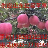 供应山东苹果红星黄元帅大量上市