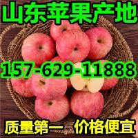 山东烟台红富士苹果一斤多钱