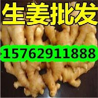 山东生姜产地价格