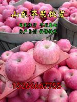 山东优质生姜价格批发供应 产地直销 生姜批发产地 鲜姜供应价格