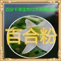 百合粉 厂家生产动植物提取物定做浓缩浸膏 百合水溶粉
