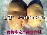 马铃薯神池马铃薯晋薯16号4两起步不封顶