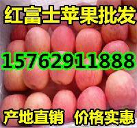 山东烟台红富士苹果最新价格