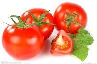 番茄粉 厂家直销 基地种植 专业提取 品质保证