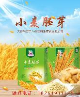 飞雪粮油冲饮代餐营养小麦胚芽400g 面食添加 即食佳品
