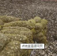 蛤壳提取物 厂家直销  蛤壳粉  大量库存 批发价格