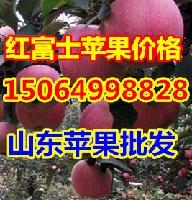 山东早熟苹果价格,嘎啦苹果价格