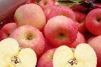 苹果膳食纤维60%