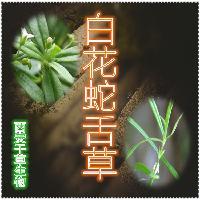 白花蛇舌草浓缩粉 厂家生产白花蛇舌草浓缩粉