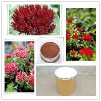 天然 红景天提取物 厂家直销 品质保证