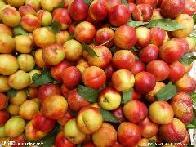 沂水油桃价格
