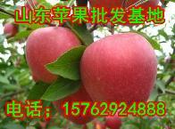 红富士苹果价格山东苹果价格
