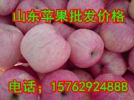 山东苹果价格行情冷库红富士苹果价格
