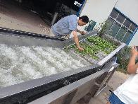 豆芽不锈钢蔬菜清洗设备