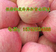 山东冷库红富士苹果供应基地80苹果价格