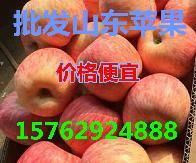 山东冷库苹果批发基地红富士苹果价格超低
