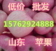 低价大量供应山东优质红富士苹果苹果