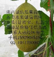 陕西哈密瓜