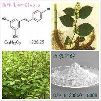 虎杖提取物:白藜芦醇98%