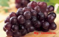 井川108葡萄