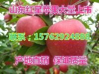 山东红星苹果批发价格