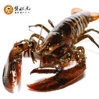 【蟹状元】进口鲜活加拿大龙虾500g