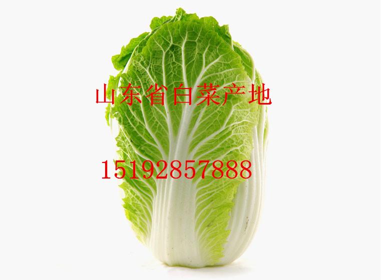 山东白菜价格