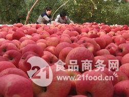 供应山东红富士苹果