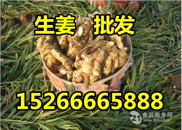 山东大姜生姜供应价格