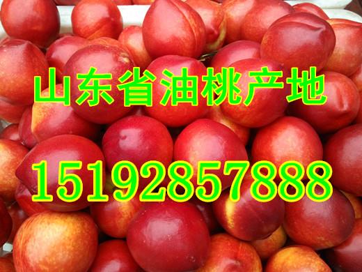 今年大棚油桃批发价格及产地收购价格