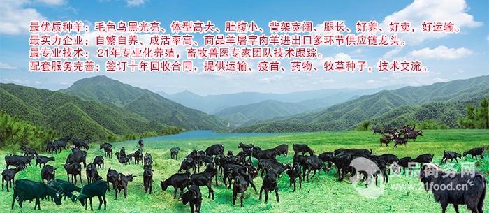 长沙湘美黑山羊,好口碑,专业种羊培育基地