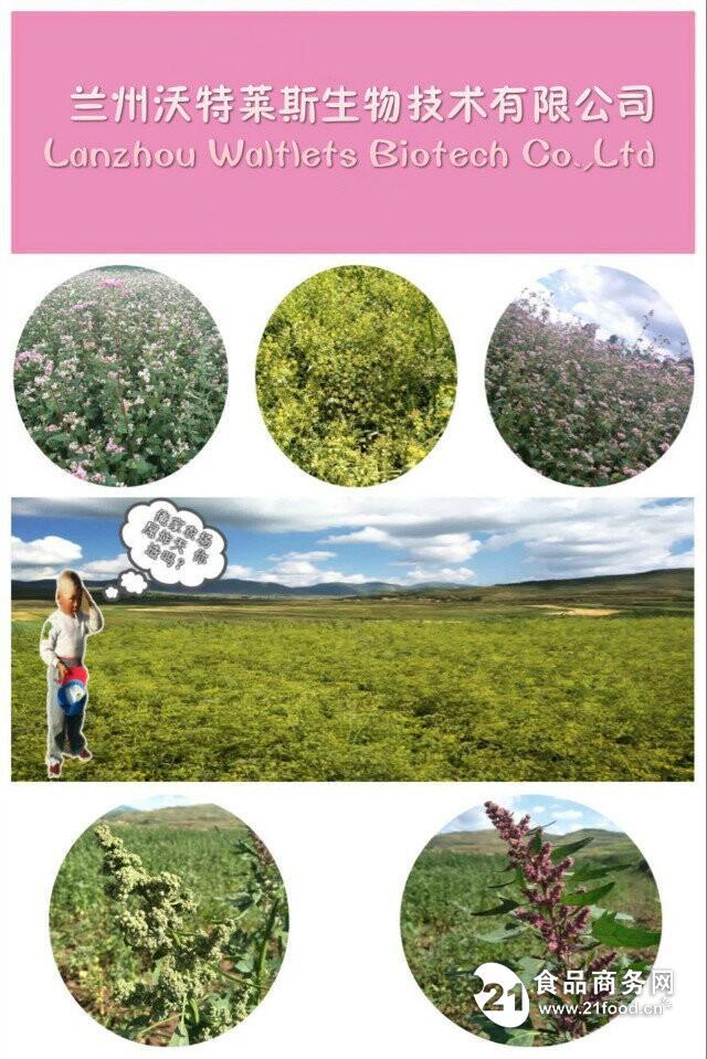 竹叶黄酮24%含量  兰州现货供应  包邮